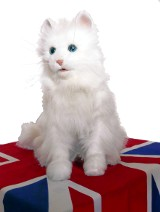 Photo: Cat sitting on union flag